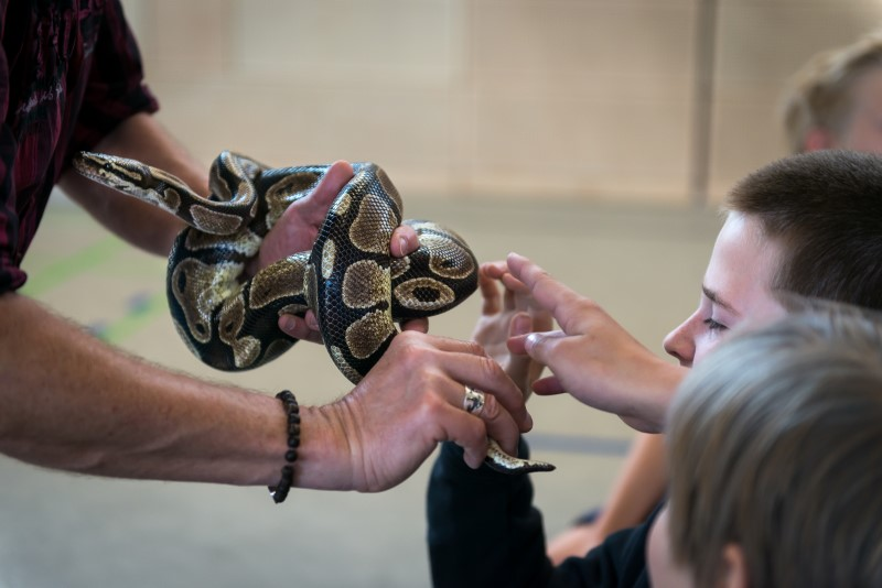 Reptilienkunde; Foto Martin Gleixner